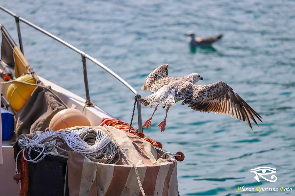 Gabbiano che ha appena spiccato il volo Da un peschereccio ormeggiato