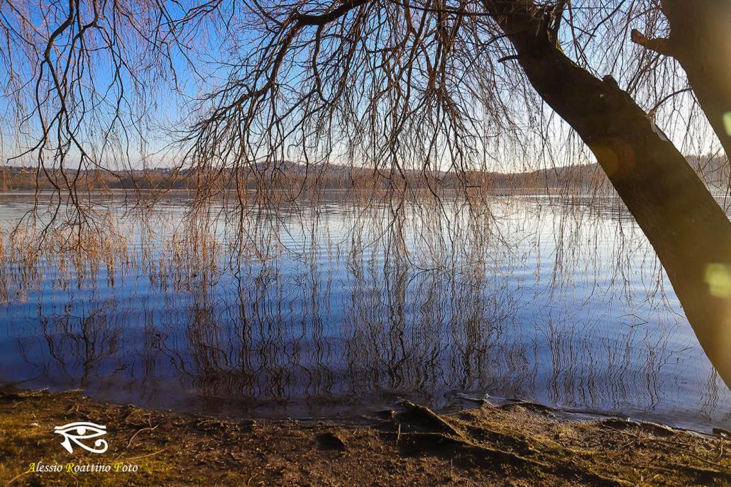 Un albero sito vicino al lago di Varese, i suoi rami spogli sfiorano l'acqua