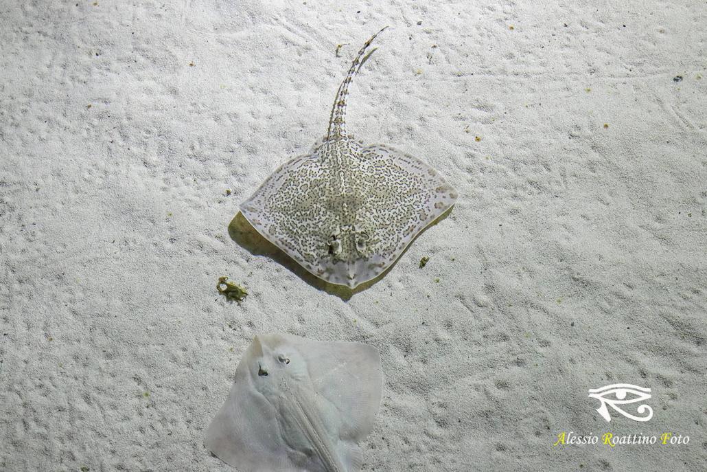Razze acquario genova