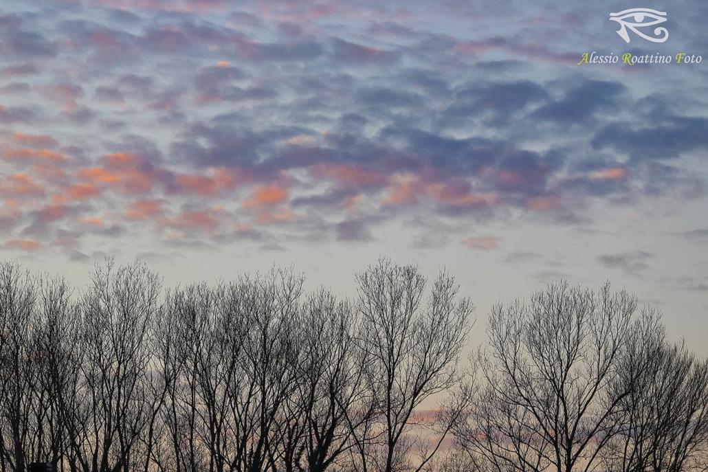 silhouette, i rami spogli di degli alberi con un cielo colorato sullo sfondo